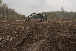 Deforestation by criminals