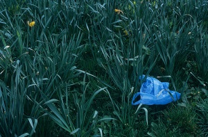 plastic shopping bags polluting a garden