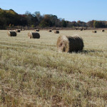 Switchgrass harvest. clean tech venture capital