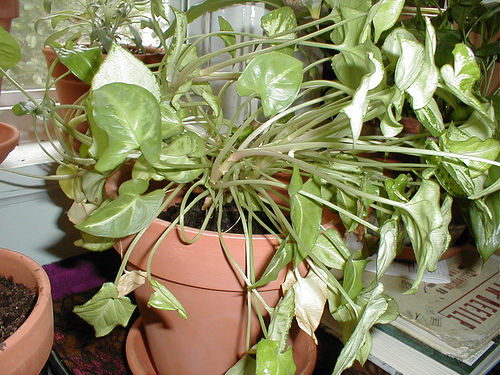 Houseplants And Clean Indoor Air