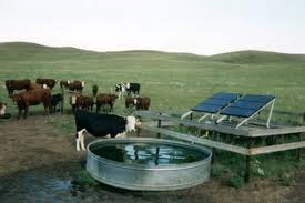 solar water pump system with cows