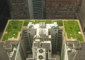 Green roof on Chicago City Hall. Urban farming