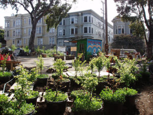 Hayes Valley Farm. Urban agriculture