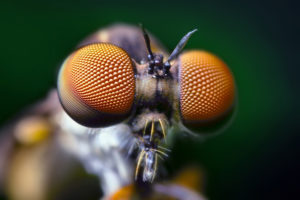 Fly eyes. perovskite solar technology