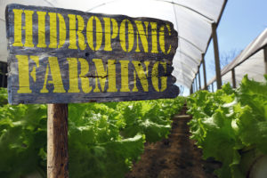 Hydroponic gardening sigh