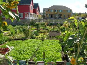 Community garden, urban agriculture, agrihood
